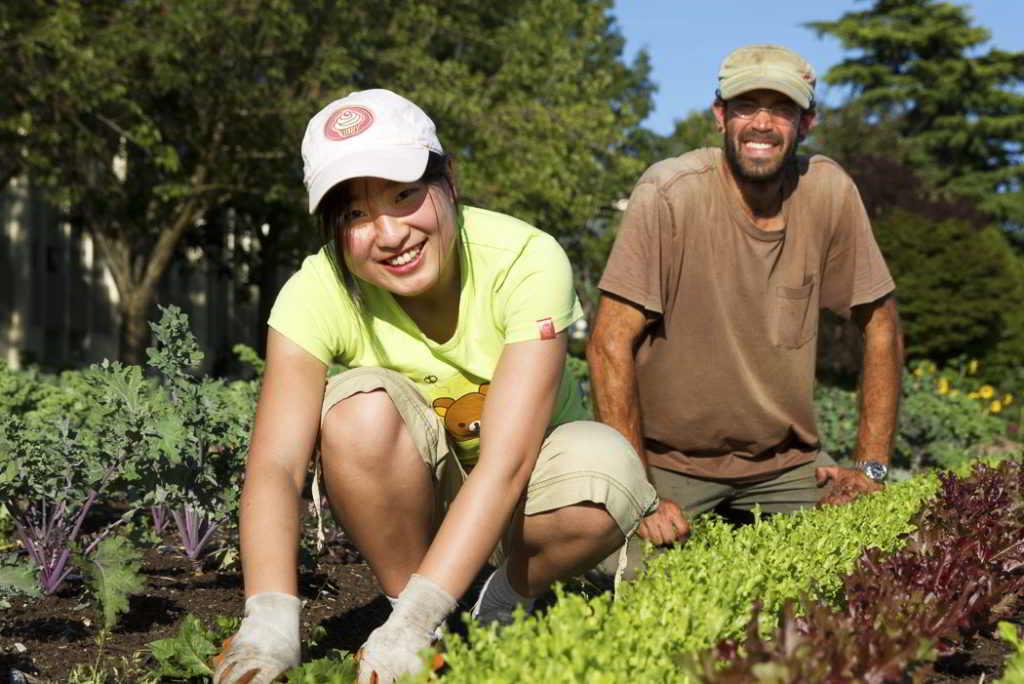 Fresh Roots Farm Internship