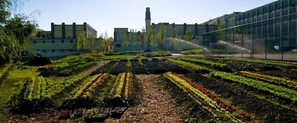 Fresh Roots Schoolyard Farm