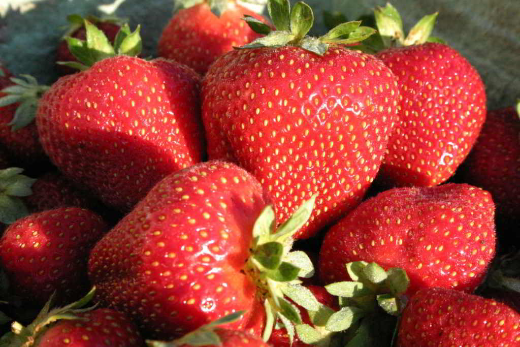 Saanich Organics strawberries