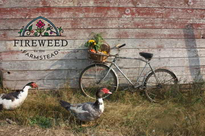 Fireweed - Farm Bicycle
