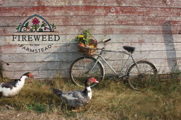 Fireweed - Farm Bicycle