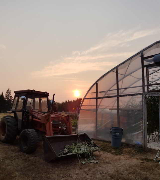 Fireweed - Farm Sunset Over Greenhouse