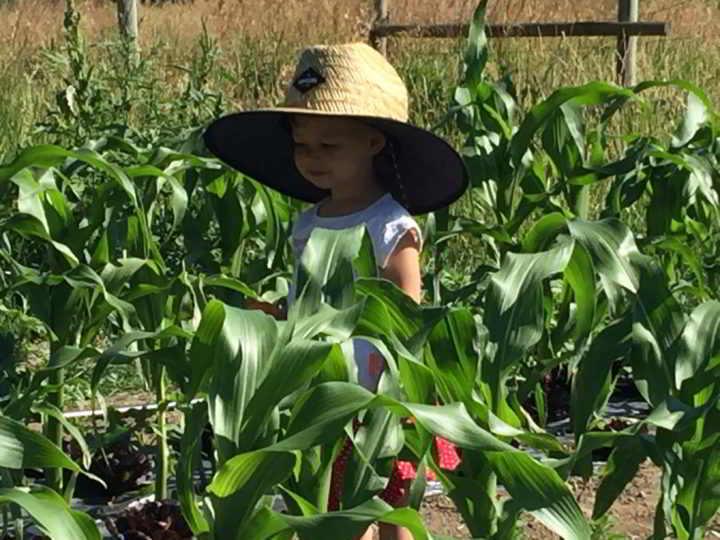 Holland - Children in Corn