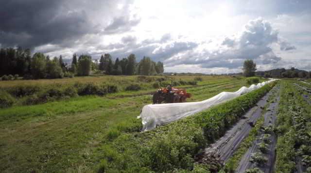close to home organics 6