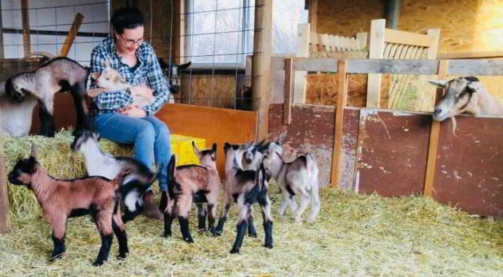 Ramos - Milking Goat Herd