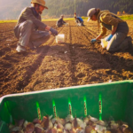 FARM JOB: ENDERBY, BC: Wild Flight Farm – Organic Vegetable Farm Manager