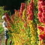 POSITION FILLED: FARM JOB: LANGFORD, BC – Vitality Farm, Farm Hand