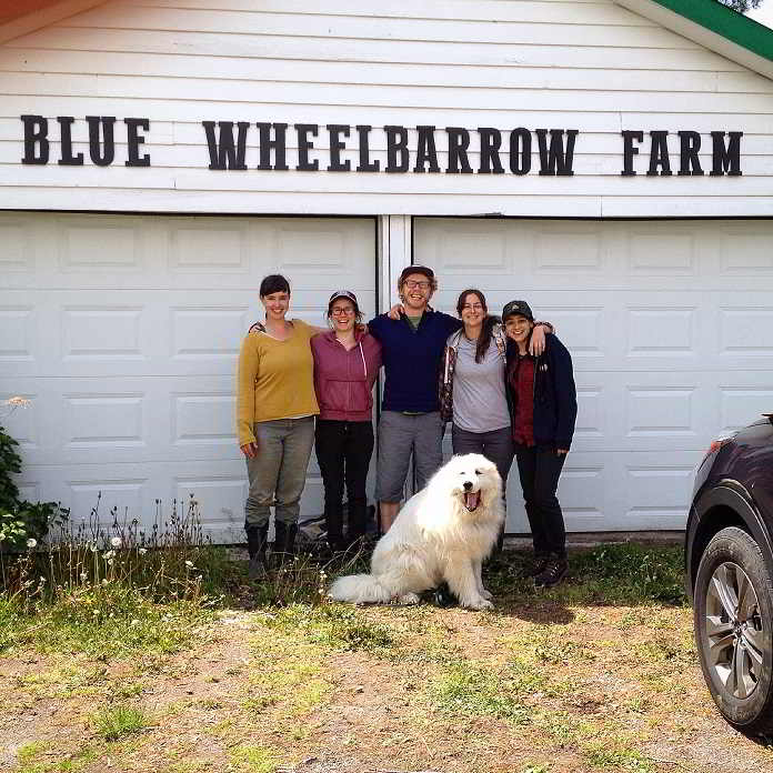 blue wheelbarrow farm