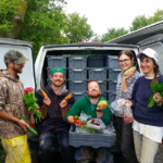 FARM JOB: KINGSTON, ON – Root Radical CSA – Organic Farm Worker
