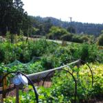 FARM JOB: VICTORIA, BC – Serenity Farm, Garden Manager