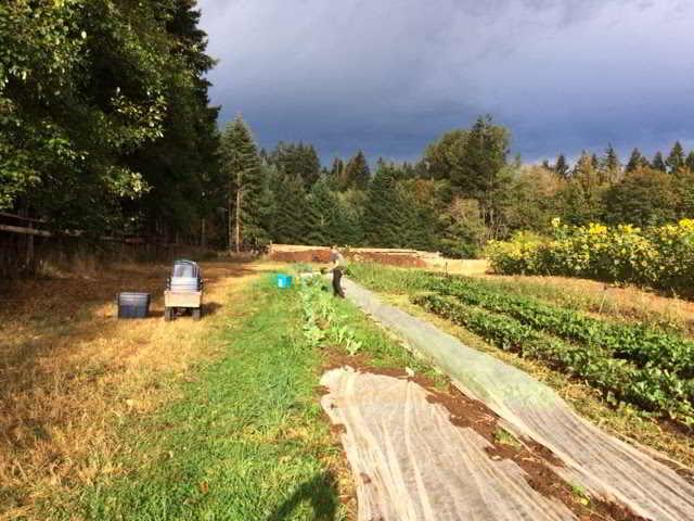 glenora farm