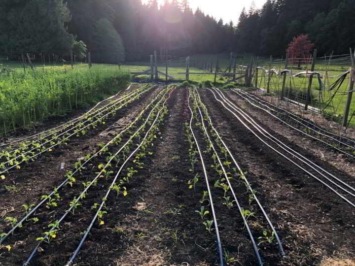 home farm gardens bowen island