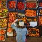 FARM JOBS: SURREY, BC – Zaklan Heritage Farm