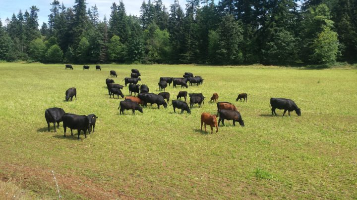 Tannadice Farm