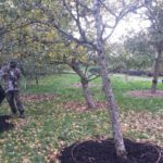FARM JOB: VICTORIA, BC – LifeCycles Project, Welland Orchard Coordinator