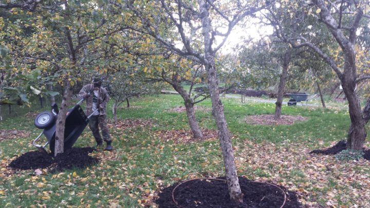 welland community orchard
