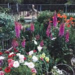 FARM JOB: VANCOUVER, BC – Nelson Park Community Garden, Maintenance Assistant