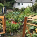 FILLED – LAND OPPORTUNITY: URBAN FARMING IN FERNWOOD – VICTORIA, BC