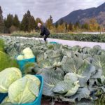 FARM JOB: SALMO, BC – Salix and Sedge, Market Garden Farm Hand