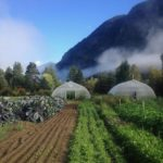 ~ FILLED ~ FARM JOB: PEMBERTON, BC – Ice Cap Organics, Field Crew