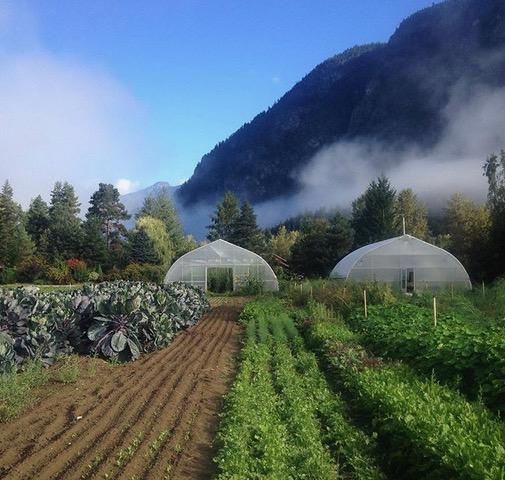 ice cap organics