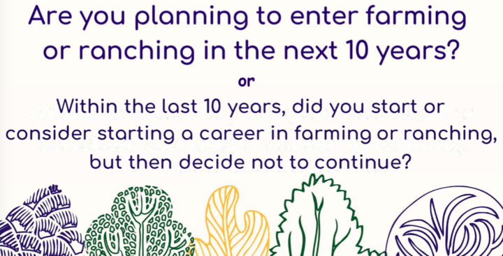 Farming Focus Groups