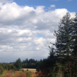 CO-OP OPPORTUNITY: ORGANIC FARM FOR CO-OWNERSHIP – MERVILLE, BC