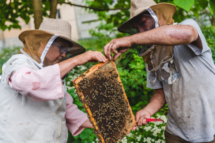 hives for humanity vancouver beekeeping job