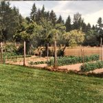 LAND OPPORTUNITY: LARGE GARDEN FOR LEASE, PLUS FIELD AND FOREST SPACE – DUNCAN, BC