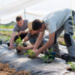 STUDENT FARM JOBS: SURREY, BC – Zaklan Heritage Farm, Field Hands