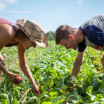 FARM JOBS: MONTREAL, QC – Santropol Roulant, Summer Farm Jobs for Youth