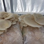 APRIL 14, 2019: CALGARY, AB – Growing Edible Mushrooms in Your Home