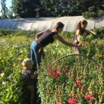 FARM JOB: SALT SPRING ISLAND, BC – Earth Candy Farm, Farm Worker