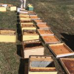 Job Filled: FARM JOB: CALGARY, AB – ABC Bees, Summer Beekeeper and Queen Breeding Manager