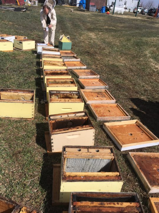 ABC Bees, Farm job, beekeeping job, calgary, alberta