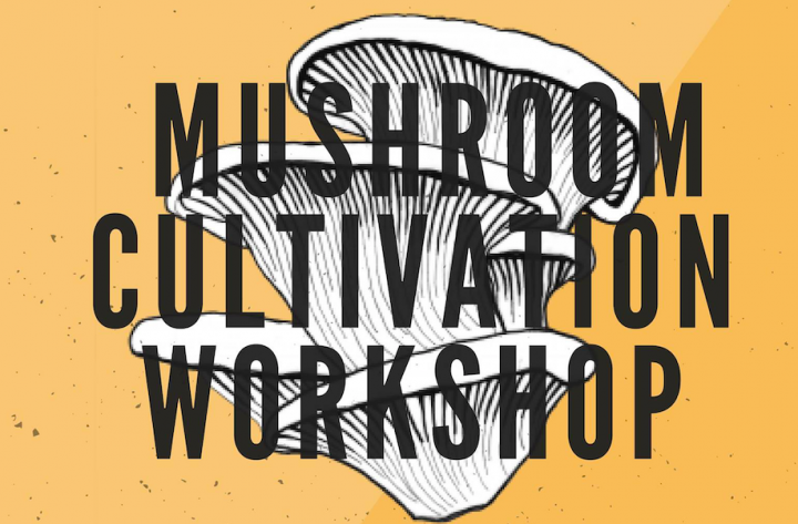 mushroom cultivation workshop tangled roots aldergrove