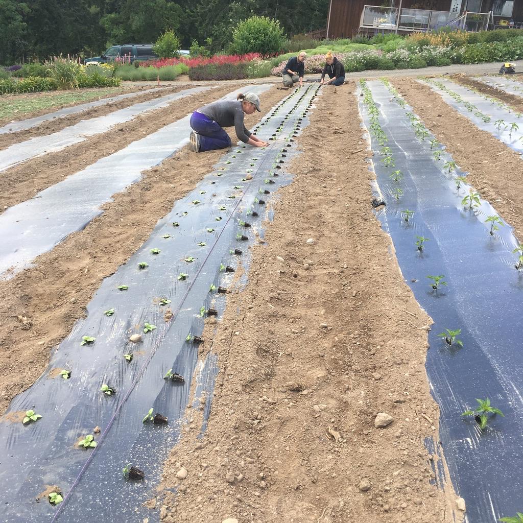 square root farm, saanich, victoria