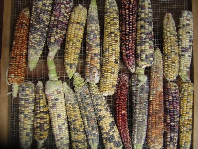 biodynamic seeds for sale, kootenays