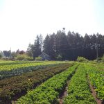 FARM JOBS: DELTA & PARKSVILLE, BC – Salt & Harrow Farm, Field & Market Staff