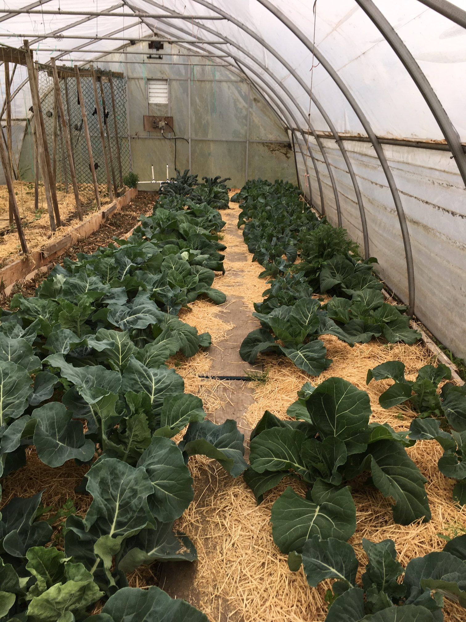 Thrangu Monastery orchard greenhouse farm worker richmond