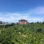 FARM JOB: RICHMOND, BC – Orchard & Greenhouse Worker, Thrangu Monastery