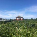 FARM JOB: RICHMOND, BC – Orchard & Greenhouse Worker, Thrangu Monastery