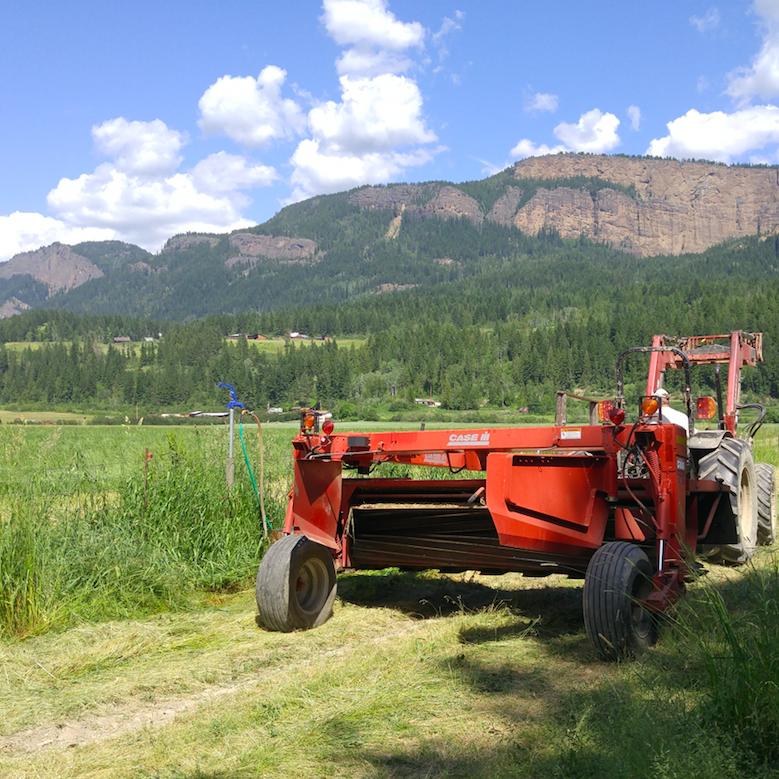 Fre-Da-Ro Farm, enderby, organic, farm job
