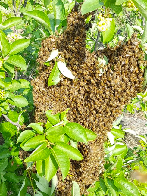 wild antho, armstrong bc, farm job, beekeeping