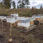 FARM JOB: ARMSTRONG, BC – Beekeeper's Helper/Labourer, Wild Antho