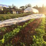 FARM JOB: VICTORIA, BC – Belle-Isle Farm, Part-Time Farm Hand