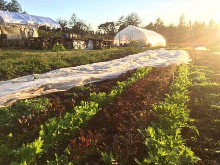 Belle-Isle Farm, Victoria, Farm job