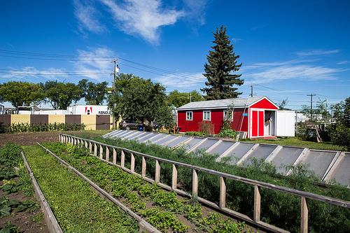 urbanfarm