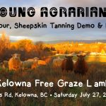 JULY 27, 2019: KELOWNA, BC – Farm Tour, Sheepskin Tanning Demo & Potluck with Kelowna Free Graze Lamb