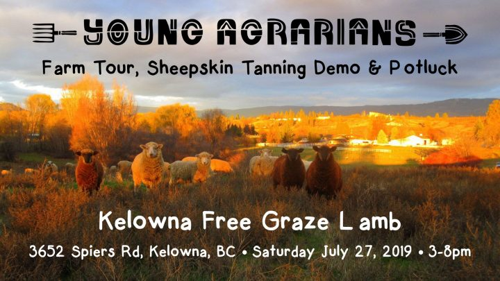 Kelowna Free Graze Lamb, July 27, kelowna, farm tour, workshop, potluck